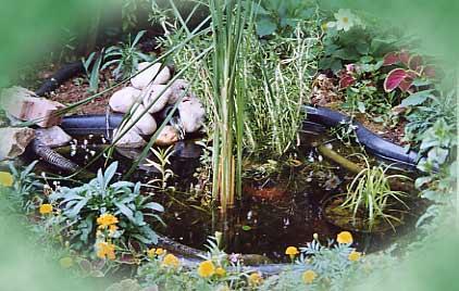 bassin de jardin 250 litres